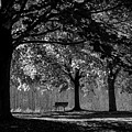Solitude Bench Black And White by Terry DeLuco