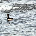 Solo Duck by Linda Kerkau