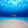 Solo Under The Sea by Gill Bustamante
