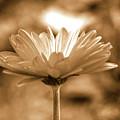 Some Shine by Lori Tambakis
