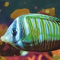 Something Fishy by Deborah Selib-Haig DMacq