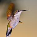 Something On My Beak? by Rikk Flohr