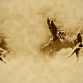 Song Of The Angels In Sepia by Bill Cannon