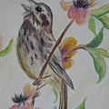 Song Sparrow by Wendy Smith