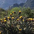 Sonoran Desert Cholla  by Saija Lehtonen