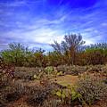 Sonoran Desert H1819 by Mark Myhaver