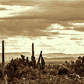 Sonoran Desert Mountains And Cactus Near Phoenix by Kenneth Roberts