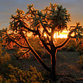 Sonoran Desert Sunrise 2 by Bob Christopher