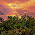 Sonoran Desert Sunset H44 by Mark Myhaver