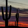 Sonoran Desert Sunset by Susan Westervelt