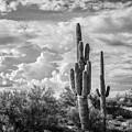 Sonoran Desert View by Jack Sassard