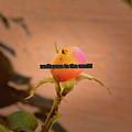 Soon A Beauty #b3 Greetingcard To A New Born by Leif Sohlman