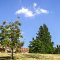 Sorb-tree by Arthur Babiarz