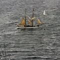 Soren Larsen Tall Ship Enters Sydney Harbour by Miroslava Jurcik