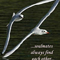 Soulmates  by Terrie Sizemore