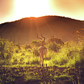 South Africa At Its Finest  by Chantelle Flores
