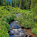 South Fork Ranch Creek Colorado by Robert Meyers-Lussier