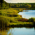 South From The Causeway Huntington Beach State Park Sc by Gary Nelson