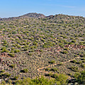 South Mountain Trail by Tom Dowd