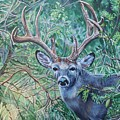 South Texas Deer In Thick Brush by Diann Baggett