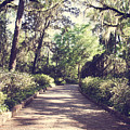 Southern Beauty 2 - Tallahassee, Florida by Andrea Anderegg