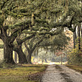 Southern Drive Live Oaks And Spanish Moss by Dustin K Ryan