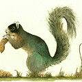Southern Fox Squirrel Peanut by Juan Bosco