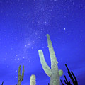Southern Hemisphere Night Sky And Cactus by James Brunker