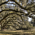 Southern Live Oaks With Spanish Moss Color by Dustin K Ryan