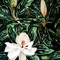 Southern Magnolia Bud And Bloom by Patricia L Davidson
