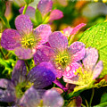 Southern Missouri Wildflowers 1 by Debbie Portwood