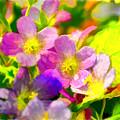 Southern Missouri Wildflowers 1 - Digital Paint 1 by Debbie Portwood