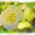 Southern Missouri Wildflowers - Mayapples Bloom - Digital Paint 2 by Debbie Portwood