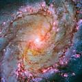 Southern Pinwheel Galaxy - Messier 83 -  by Jennifer Rondinelli Reilly - Fine Art Photography