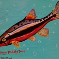 Southern Redbelly Dace by Emily Reynolds Thompson