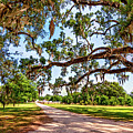 Southern Serenity by Steve Harrington