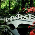 Southern Splendor by Gary Wonning