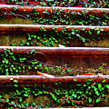 Southern Ivy Steps by JAMART Photography