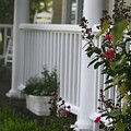 Southern Summer Flowers And Porch by Nadine Rippelmeyer