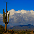 Southwest Saguaro Desert Landscape by James BO Insogna
