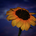 Southwest Sunflower by Keith Peacock