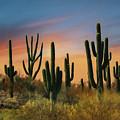 Southwest Sunset by Lori Deiter