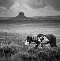 Southwest Wild by Anthony Bonafede