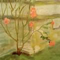 Southwick Hall Rose by Paula Maybery