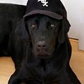 Sox Fan by Martin Massari