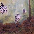 Spadefish In Fl by Audrey Bunchkowski
