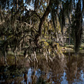 Spainsh Moss Hanging Over Pond On Middleton Place by Dale Powell