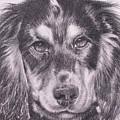 Spaniel Detail by Keran Sunaski Gilmore