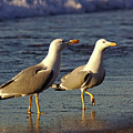 Spanish Gulls On The Beach by Jeremy Hayden