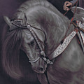 Spanish Horse by Karie-Ann Cooper